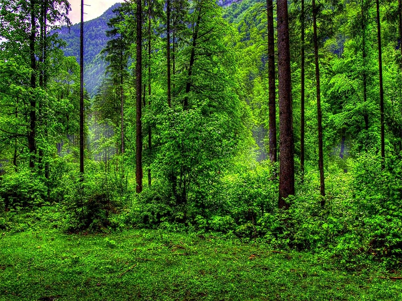 Буковые леса �спании