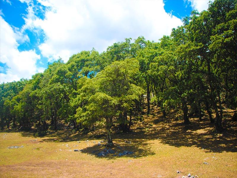 Листопадные  леса южной �спании