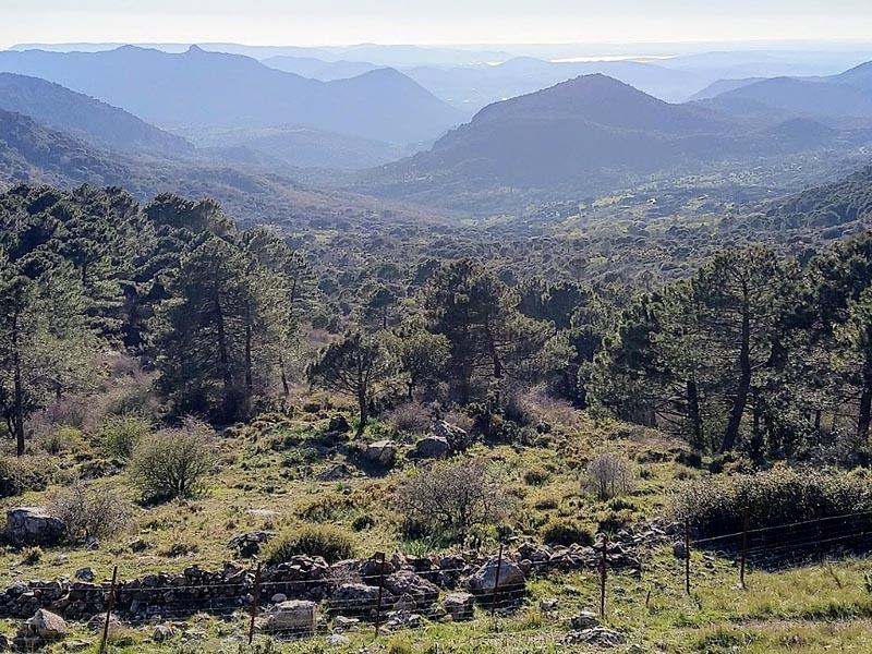 Растительный мир южной �спании