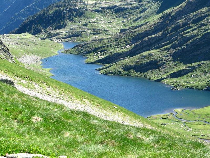 Альпийский растительный пояс в Пиренеях