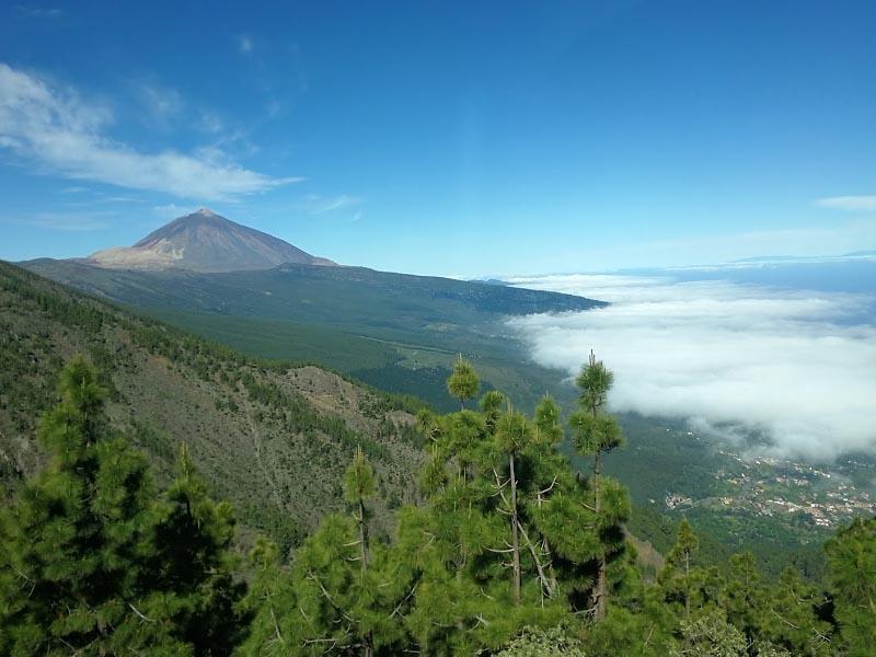 Растительность горных районов Канарских островов
